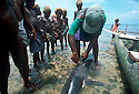 A shark caller from Kontu village on the West Coast of New Ireland is surrounded by excited children after bringing in a shark he caught on his outrigger canoe..Kontu, New Ireland Province, Papua New Guinea;