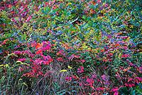Autumn wildflower meadow, Martha's Vineyard, Massachusetts, USA