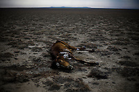 Kazakhstan Dust: Life returns to the Aral Sea, Desertification Continues.