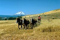 Threshing the wheat. Dufur Oregon United States.