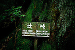 """Yakushima, June 2011 - In """"Mononoke forest"""", which inspired Miyazaki for its anime movie """"Princess Mononoke""""..The forest is also called """"moss forest""""."""