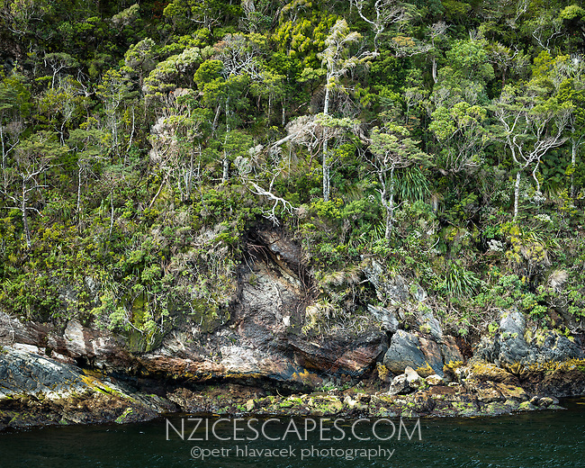 Doubtful Sound rugged coastline with native rainforest, Fiordland National Park, UNESCO World Heritage Area, Southland, New Zealand, NZ