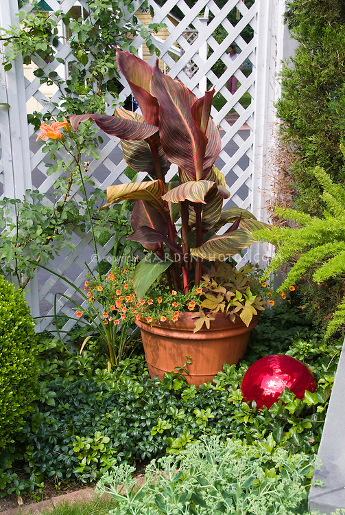 Gazing Ball, Container Pot with canna, Calibrachoa, daylily Hemerocallis fulva in orange and red tones near fecne, aspargus fern, pachysandra