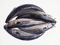 Circle of fish.