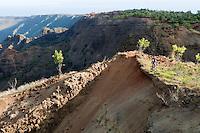 Mountain biking, Kauai, Hawaii