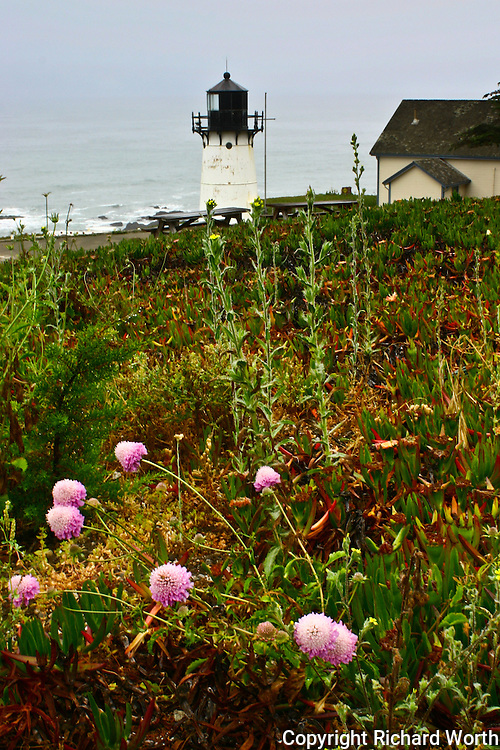 A field of flowers and plants leads up to the Point Montara Light Station, which then looks out on the vast open expanse of the Pacific.