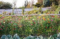 Kasteel Hex - Kitchen Garden (15th - 16th September 2014)
