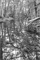 This black and white version of Texas cypress comes from the shallow waters of Cibolo Creek in Boerne. The reflections of the trees looked like a mirror in the still creek, and I wanted to share the detail that could be seen.