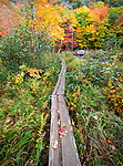 A wooden boardwalk weaves through autumn colors along the Canon Brook Trail in Acadia National Park, Maine, USA