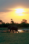 Africa, Botswana, Savute. Elephants of Savute in Chobe National Park.