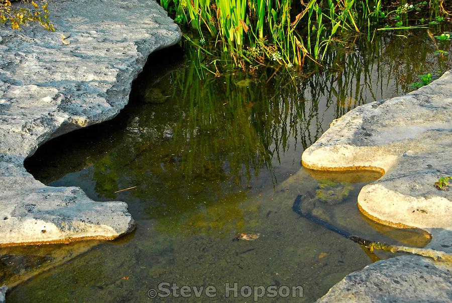 Fish hatchery steve hopson for Fish hatchery texas