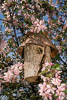Natural log birdhouse in blooming Crabapple Tree, Missouri