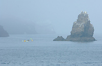 730850319 ocean kayakers skirt the edge of santa cruz island and surrounding sea stacks in heavy fog in channel islands national park off the coast of southern california