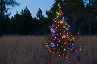 Christmas tree with lights in a field
