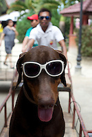 Dog and sun shades on Boracay, Philippines