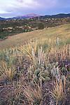 Prairie and Pike's Peak, Ute Valley Park, Colorado Springs, Colorado