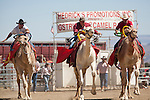 From left, Ryan Gillaspie, Shane Harrington, and Lars Boesgaard race at the 51st annual International Camel Races in Virginia City, Nevada  September 12, 2010. .CREDIT: Max Whittaker for The Wall Street Journal.CAMEL