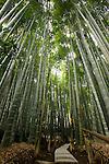 Photo shows the bamboo grove in the grounds of Hokokuji temple in Kamakura, Japan on 24 Jan. 2012. Photographer: Robert Gilhooly