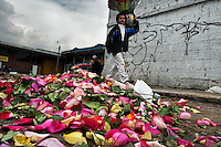 A street vendor carries a bucket of roses in front of a colorful pile of petals in the flower market of Bogota, Colombia, 24 August 2008. Colombia is one of the world leaders in cut flower industry. The advantage of the moderate sunny climate, very cheap labor force in combination with the absence of social laws and environmental regulations have created perfect conditions for the cut flower production. Flower growing is very fragile and necessarily depends on irrigation and chemical maintenance, provided by highly toxic pesticides. About 110.000 workers in Colombia, working mainly for living minimum wage, keep the floral industry going and saturate the market generated by consumerist culture the US, Canada and Europe.