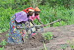 Women work in a community agriculture project outside Kamina, in the Democratic Republic of the Congo. Sponsored by the United Methodist Committee on Relief (UMCOR), the project increases food security in poor communities, especially for women and children.