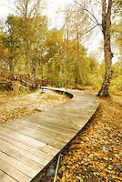 A single path meandering through the deep wood of Haba countryside in a golden coloured settings.