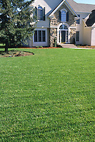 Fescue sod lawn with house