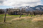 Idaho, South central, Albion. A spring view of an old homestead with rustic fence.