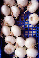 FOOD GROUPS: ROOT VEGETABLES<br /> White Onions