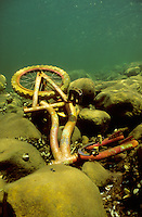 Underwater Scene-Bicycle on lake bottom<br /> <br /> ENGBRETSON UNDERWATER PHOTO