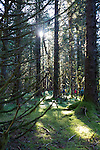 Hiking in a pristine forest at Port Althrop, Inside Passage, Alaska, USA