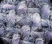 Cotton fibers, which have long been used for making fabrics. SEM X60  **On Page Credit Required**