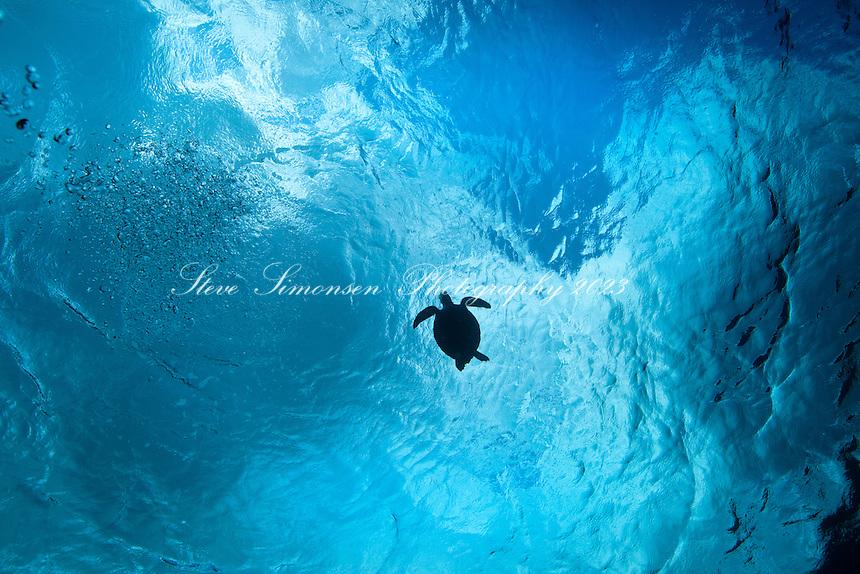 Turtle silhouette<br /> St. Croix <br /> U.S. Virgin Islands