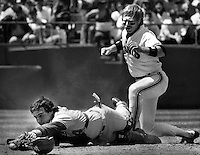 San Francisco Giants Dan Gladden is safe a home after knocking the ball from Los Angles Dodger catcher Mike Scioscia.(1985 photo by Ron Riesterer)