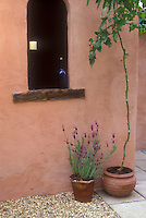 Spanish lavender herb Lavandula stoechas and tomato vine in terra cotta pot container garden next to stucco wall, candles, window, blue glass, in Mediteranean  style patio garden