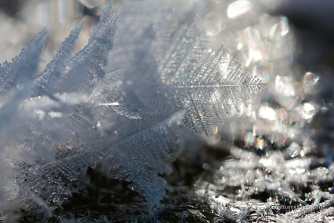 close up, frost, winter cold, below zero, polar vortex