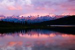 Wonder Lake shimmers pink with alpenglow at sunset. Denali, the highest mountain in North America, is obscured by pastel cloud cover, not unusual in Alaska's Denali National Park.
