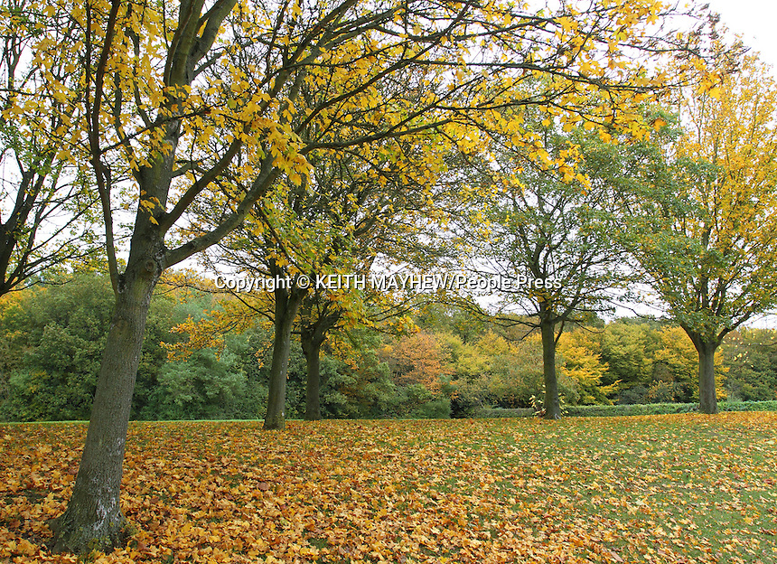 Hertfordshire, UK - Autumn Colours in Fairlands Valley Park, Stevenage, Herts, UK. October 26th 2012....Photo by Keith Mayhew