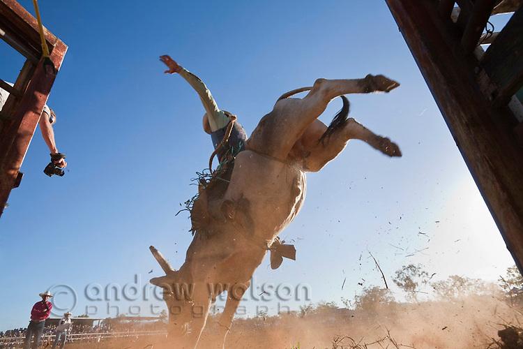 Low angle view of bull rider entering arena at Mt Garnet Rodeo.  Mt Garnet, Queensland, Australia