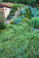 Carex, Sedge lawn substitute, , Coyote House, SITES® residential home with sustainable garden Santa Barbara California, Susan Van Atta design