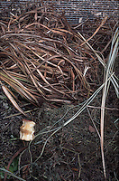 Compost Decomposition Stages Photos