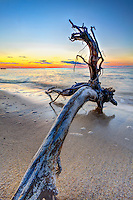 Driftwood washed up on the west end of Roanoke Island.