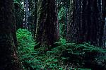 Northwest Evergreen Trees