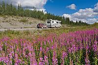 Vehicle travel, fireweed, along the Glenn Highway, southcentral, Alaska.