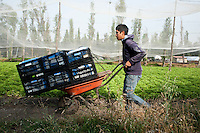Agricultural workers in Xochimilco, Mexico DF, Mexico