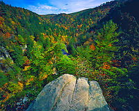 Autumn Maple & Mount Fall Colors at Linville Gorge, Linville Gorge Wilderness, Blue Ridge Parkway, Pisgah National Forest, North Carolina