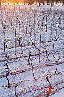 Inniskillin vineyards with the Niagara River in the background. January 15, 2012. © Allen McEachern.