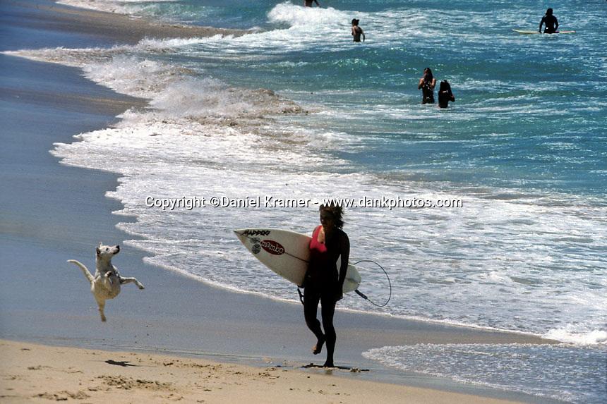 Surf Dog Australia