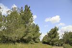 Beth Keshet forest
