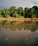 Amazon River, Tambopata National Reserve, Amazon region, PERU, South America
