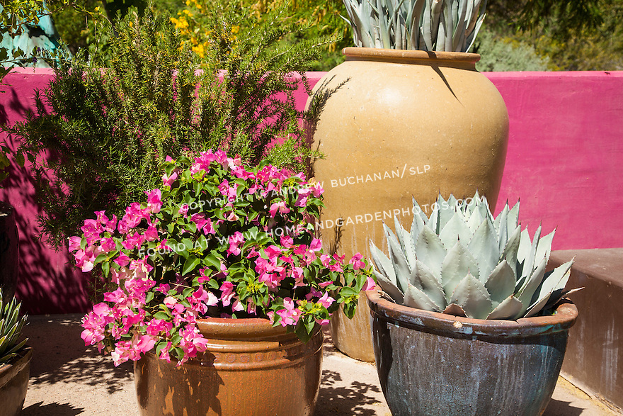 A cluster of containers set against a brightly painted pink wall at Phoenix's Desert Botanical Garden